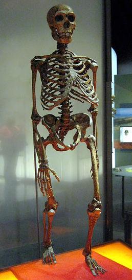 258px-neanderthalensis